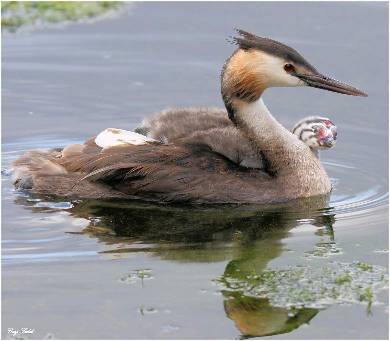 Baie de Somme : les oiseaux assurent le spectacle les jours de grandes marées