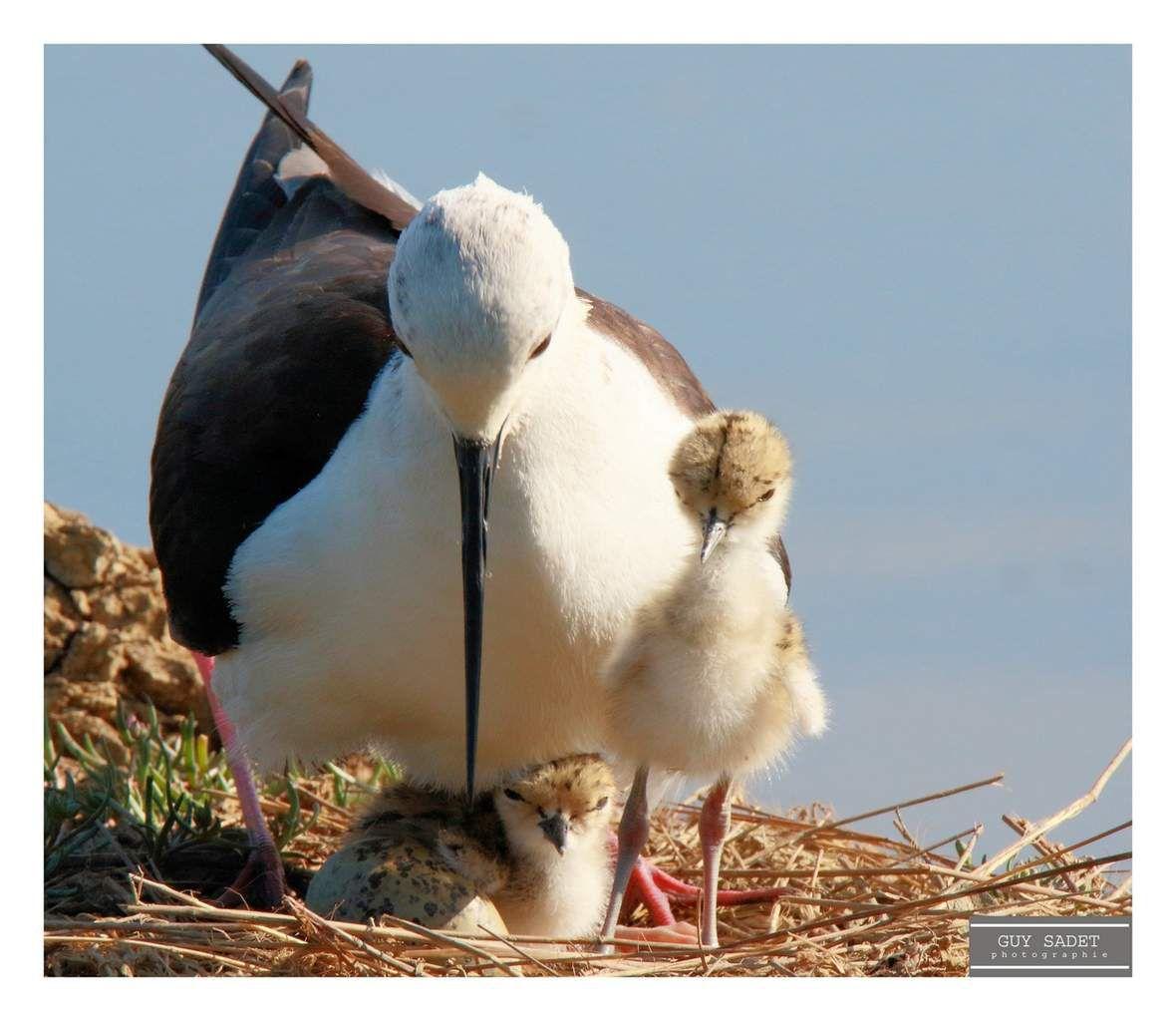 Réserve ornithologique du Teich : la vie en pleine éclosion