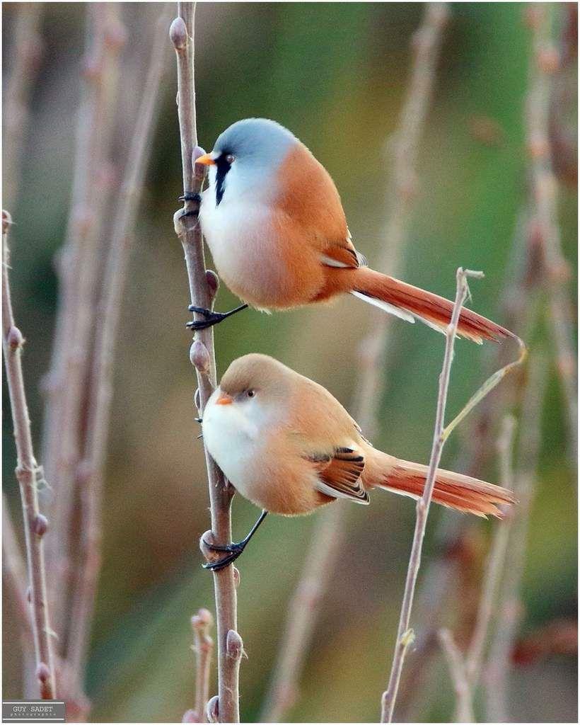 Un beau petit couple