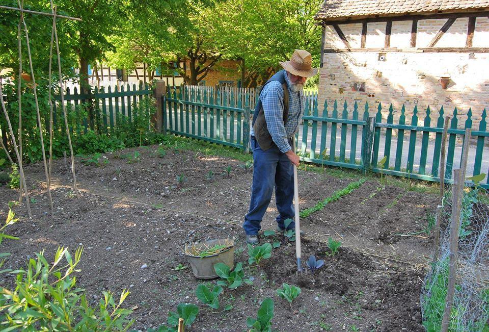 Un peu de jardinage de fin d'après midi