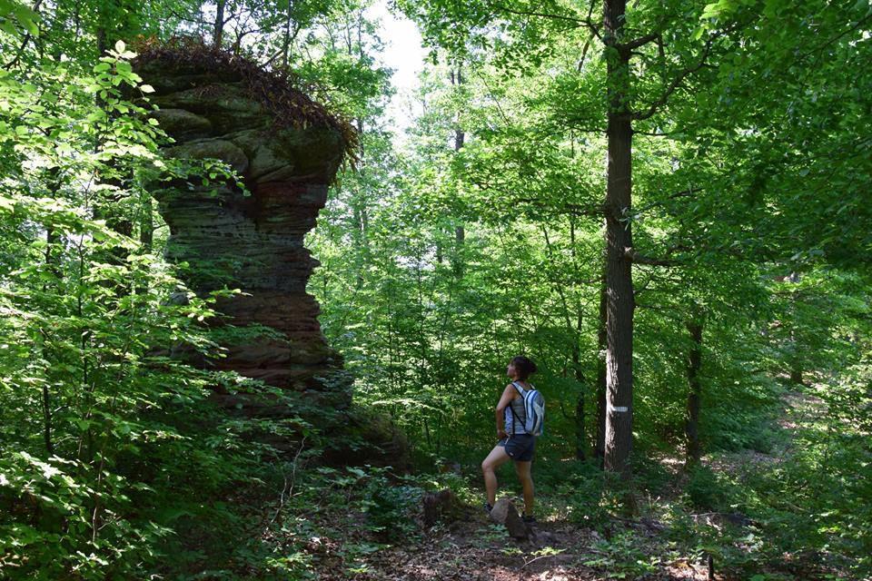 De temps en temps, un monolithe de grès émerge de la végétation