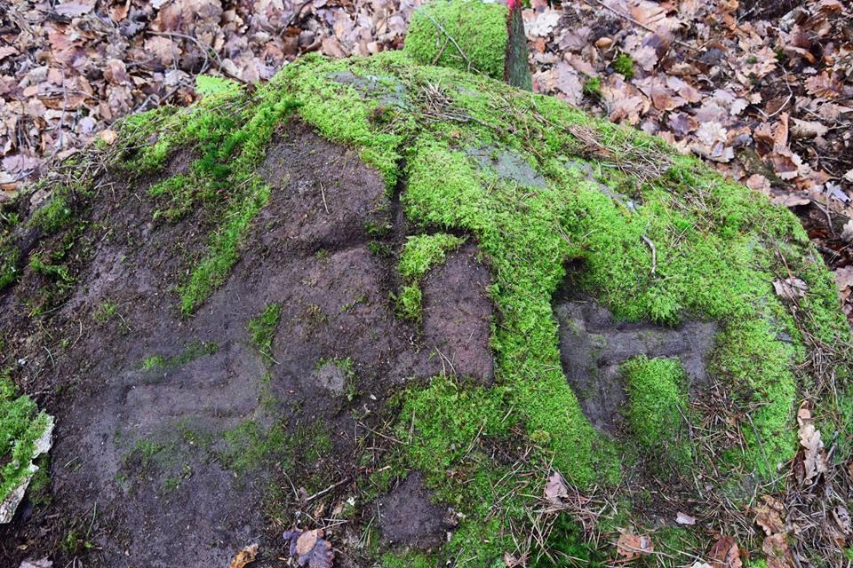 On a failli passer à côté de ce rocher borne tant la mousse le cachait. On retrouve la serpette d'Offwiller et le marteau de Lichtenberg