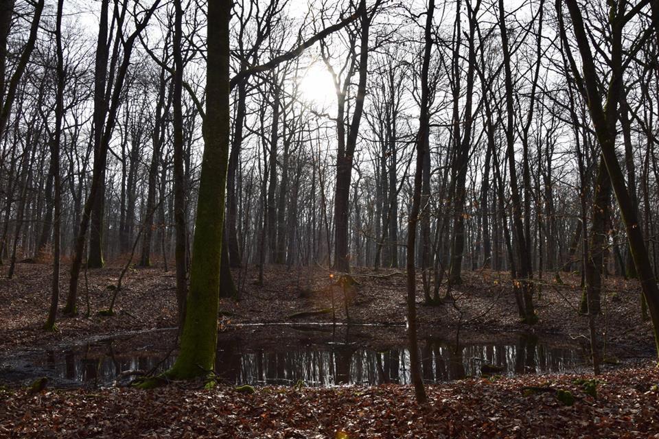 La chandeleur en forêt de Sarralbe
