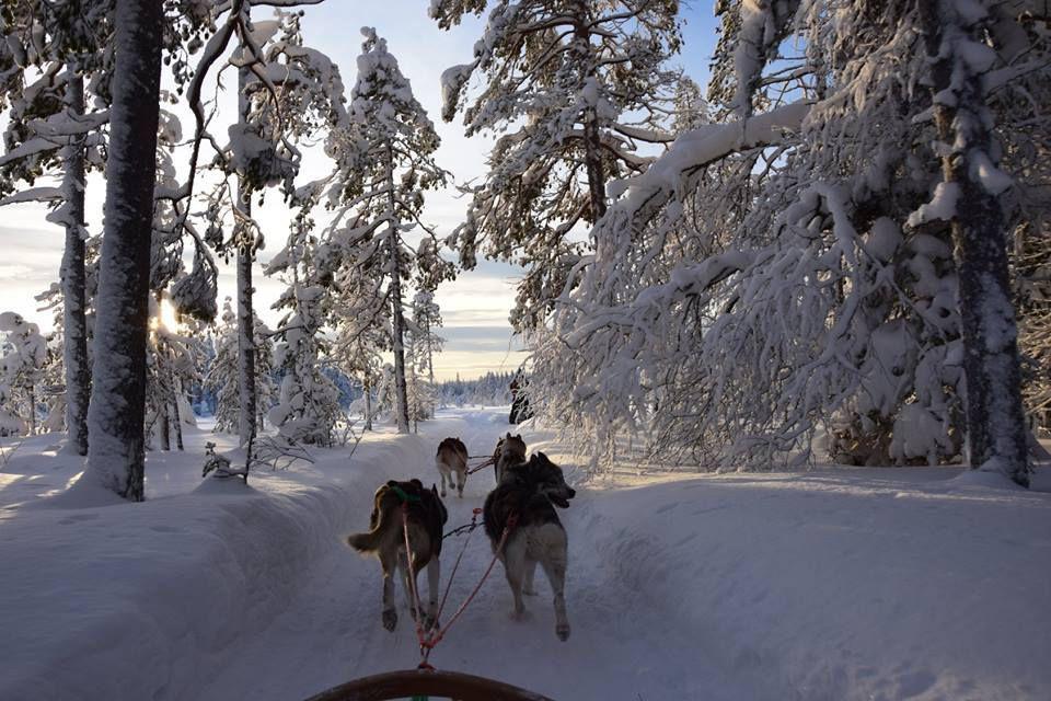 A la découverte de la Laponie en traîneau