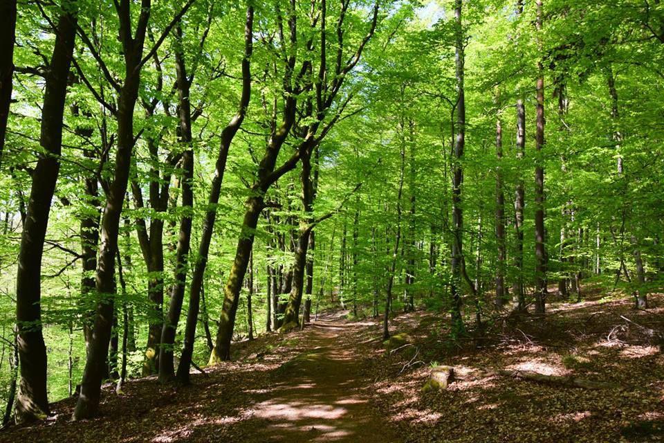 Les feuilles sont d'un vert tendre et redonnent de la vie à la forêt