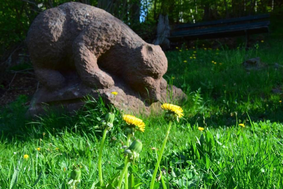Le dernier ours du Hohwald