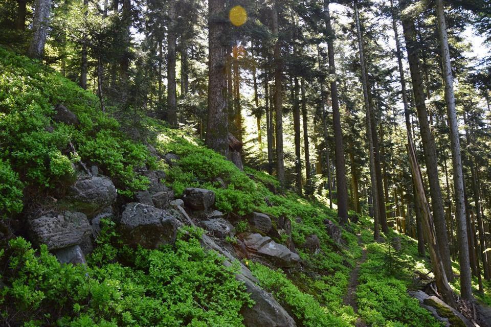Le dolmen de la Hazelle
