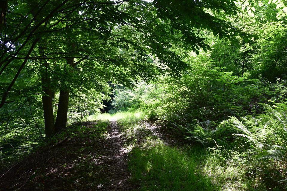 Sur un sentier ombragé du bois de Hommert