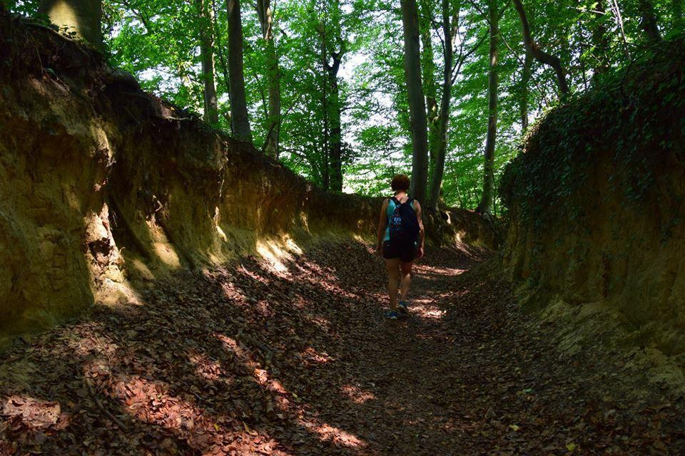 Une chemin creusé dans le loess