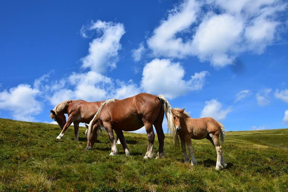 Les chevaux du Kastelberg