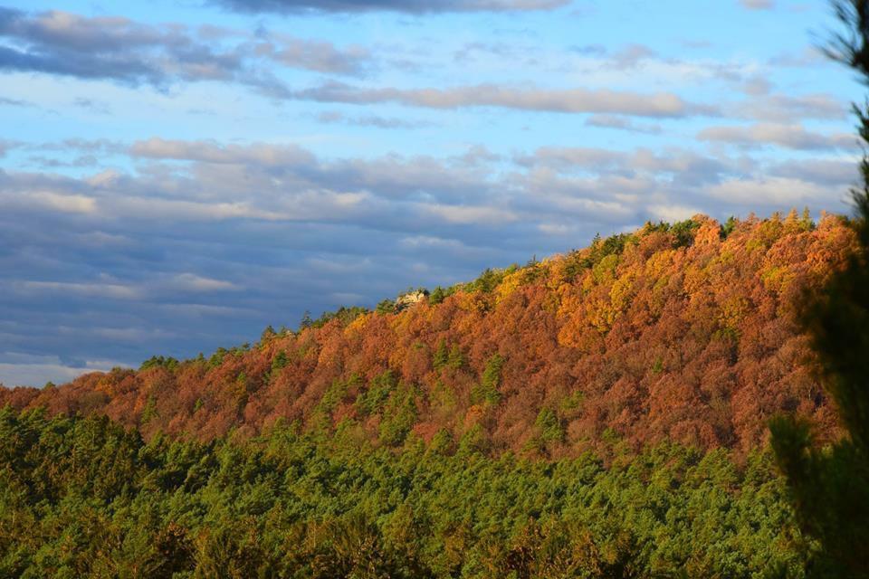 Les belles forêt des Vosges du Nord