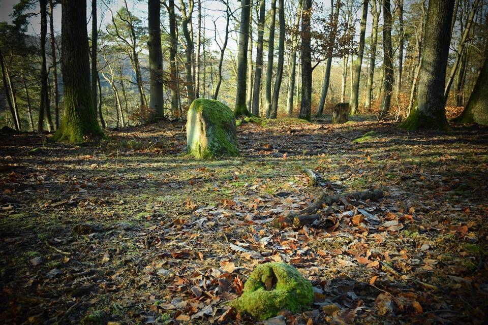 Une pierre levée en forêt de La Petite Pierre