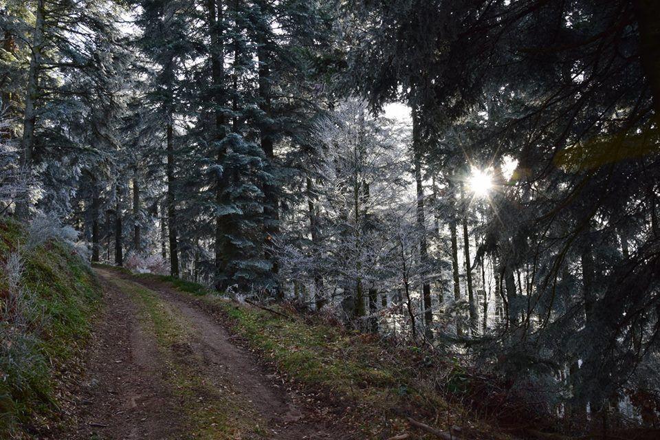 Le Violu, un champ de bataille Vosgien