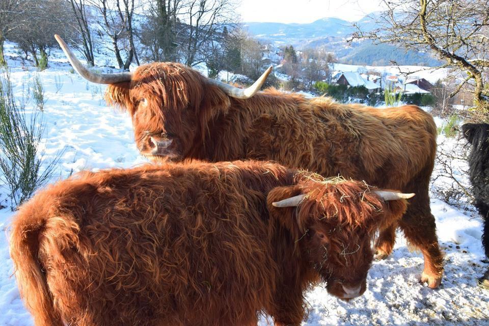 Des Highlands en hiver