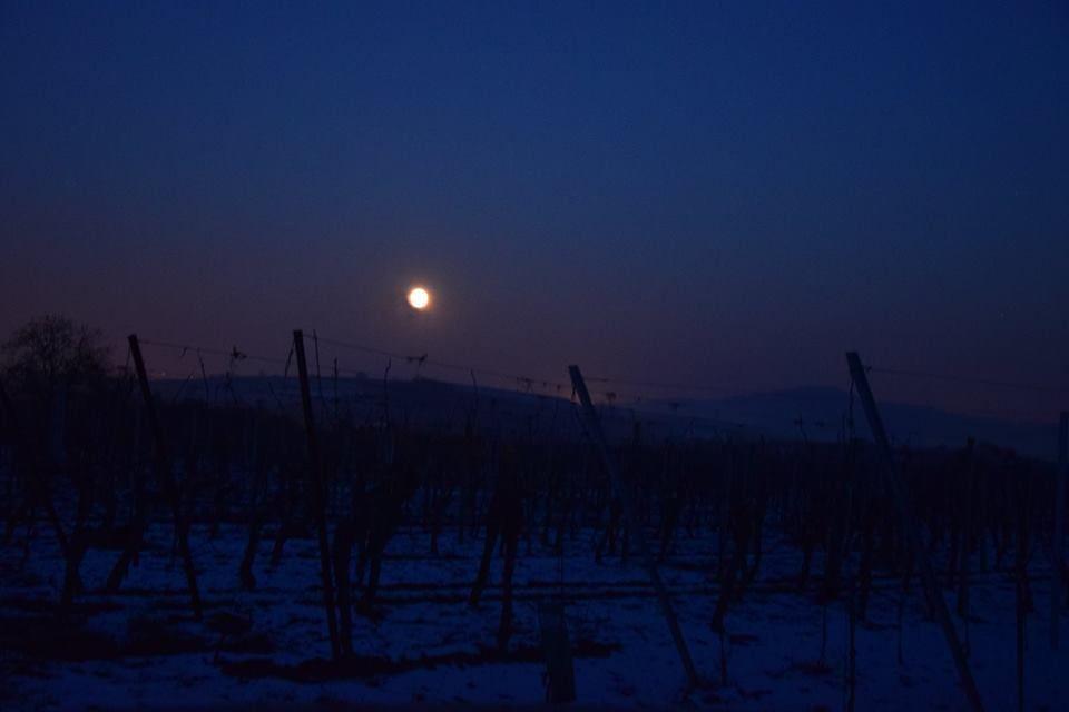 Une nuit de pleine lune ...