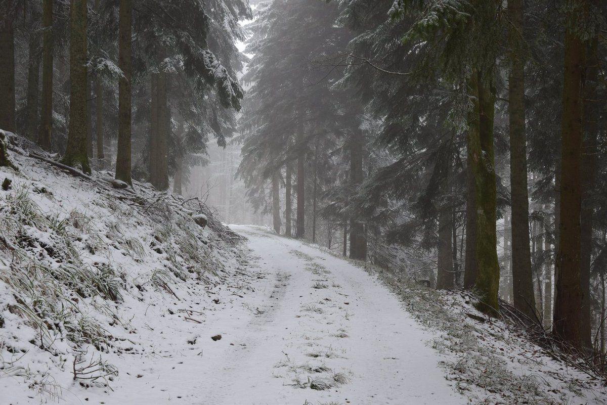 Route forestière de Birley