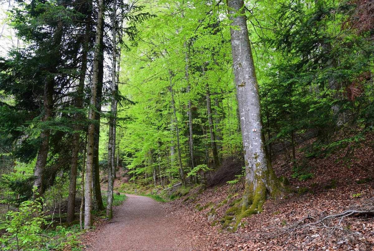 Le sentier menant à la cascade de l'Andlau
