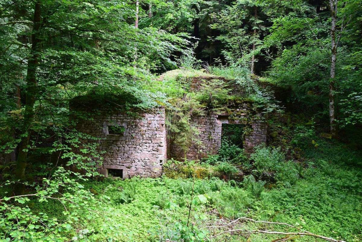 Les ruines d'une scierie