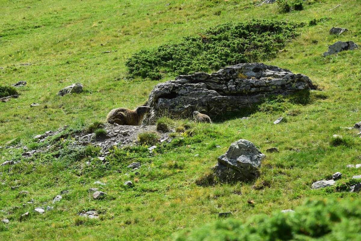 Il y a même des marmottes dans ce massif !