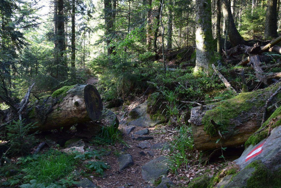 Le vieux sentier démarre à l'Elsassblick, pas loin du Hengst