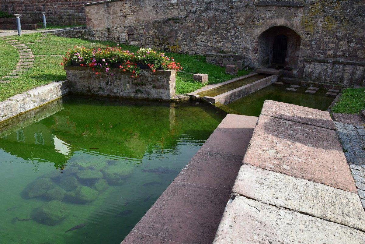 Le vieux lavoir de Dangolsheim