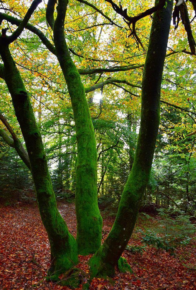 Une virée dans la forêt de Weiterswiller