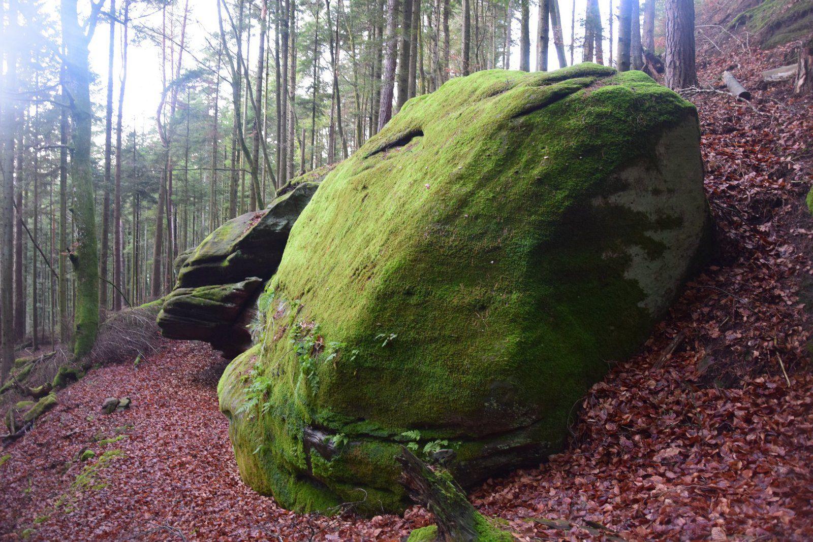 Un rocher moussu en bout de ligne de coupe