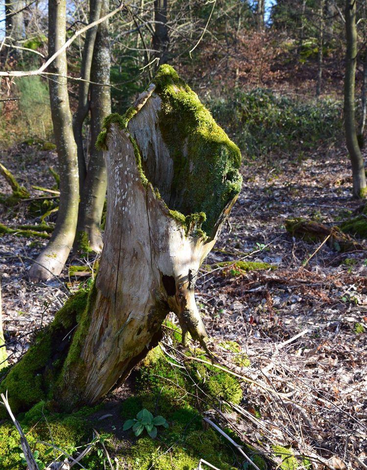 Les sentiers égarés de la forêt des Dames
