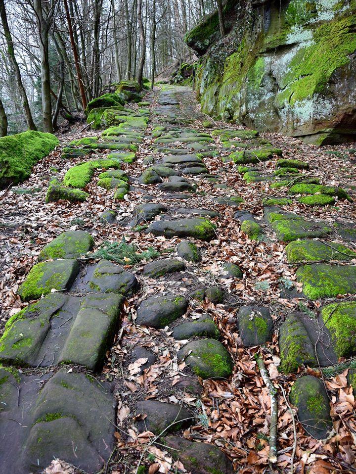 L'ancienne voie romaine (Plattenweg) est bien conservée dans ce secteur