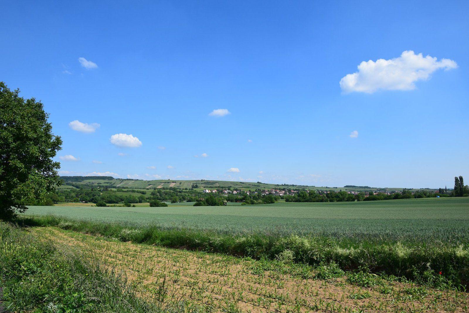 La campagne autour de Rosheim