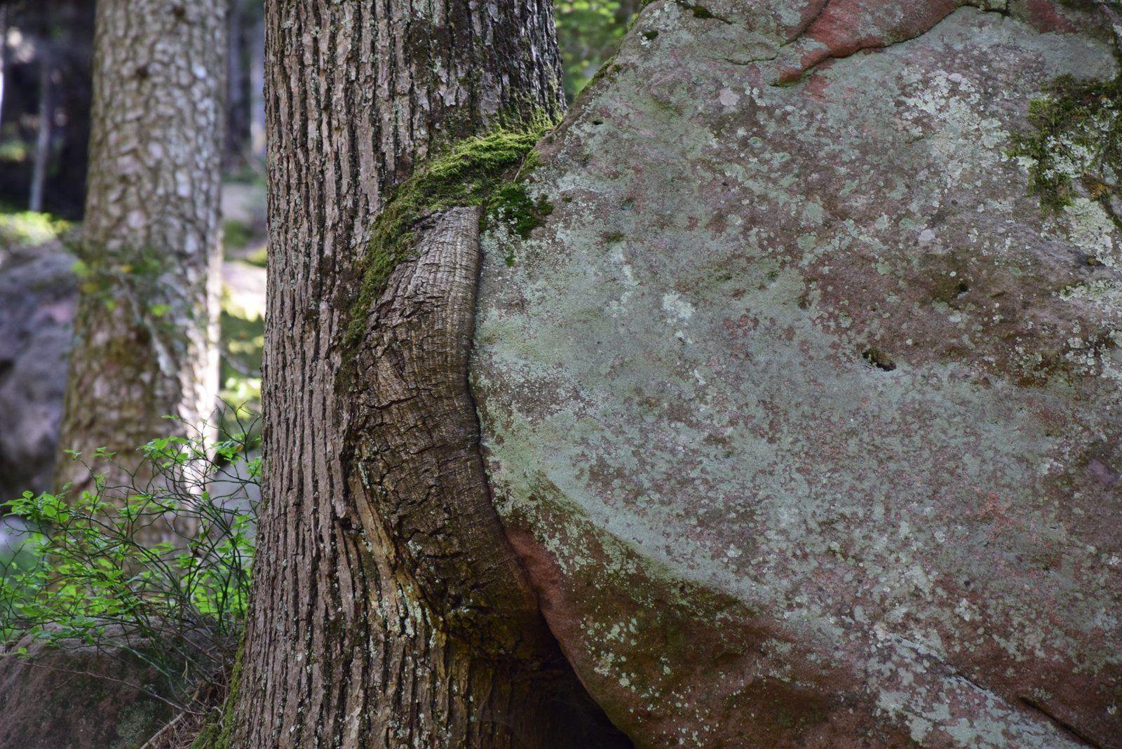 Le lac de la Maix et ses mystérieux rochers