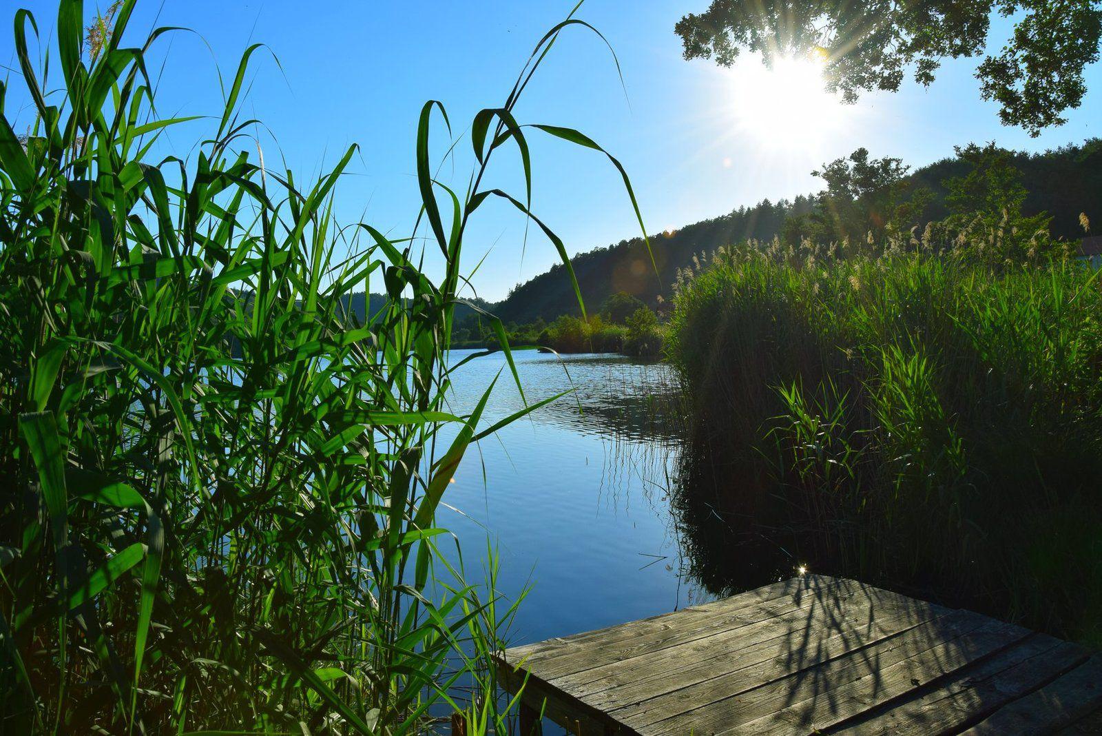L'étang de Baerenthal