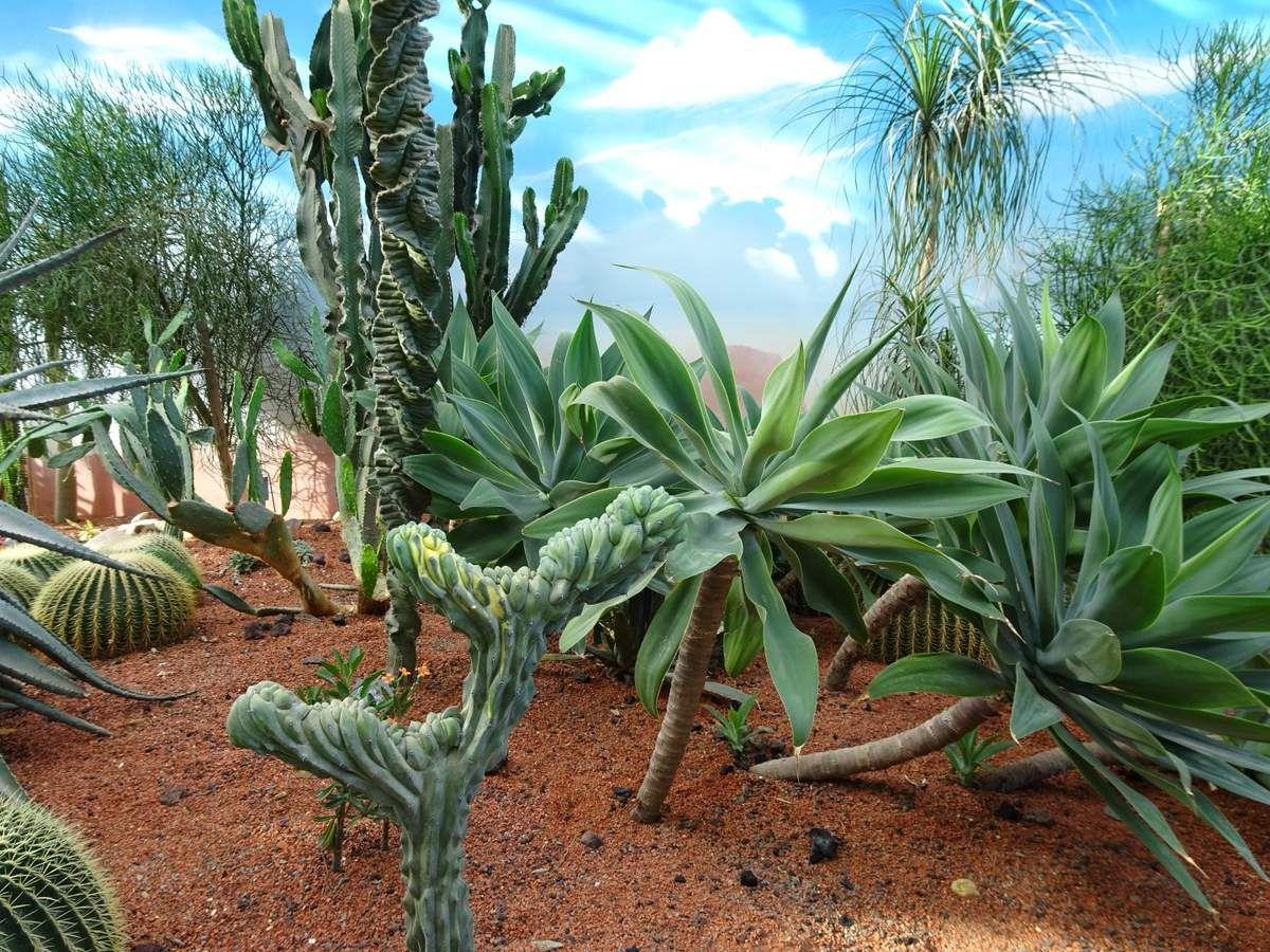 Terra Botanica