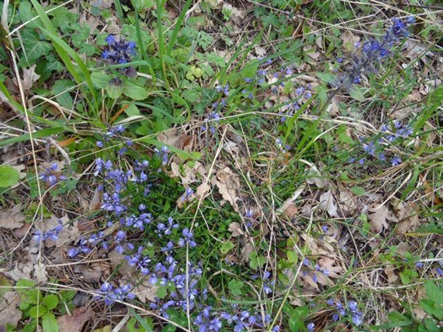 2019-05-02 Sortie botanique à la Ste. Baume