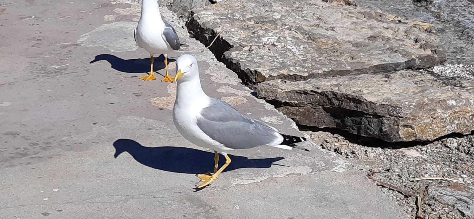 2020-03-09 Toulon / Hyères où le littoral varois