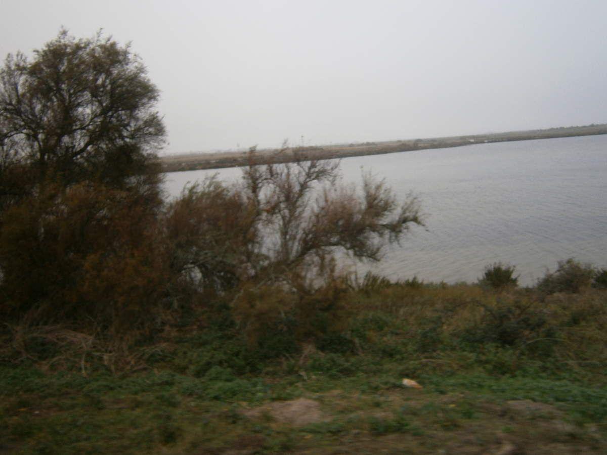 Des bateaux bien abrités et autour des marées où s'abritent des centaines d'oiseaux