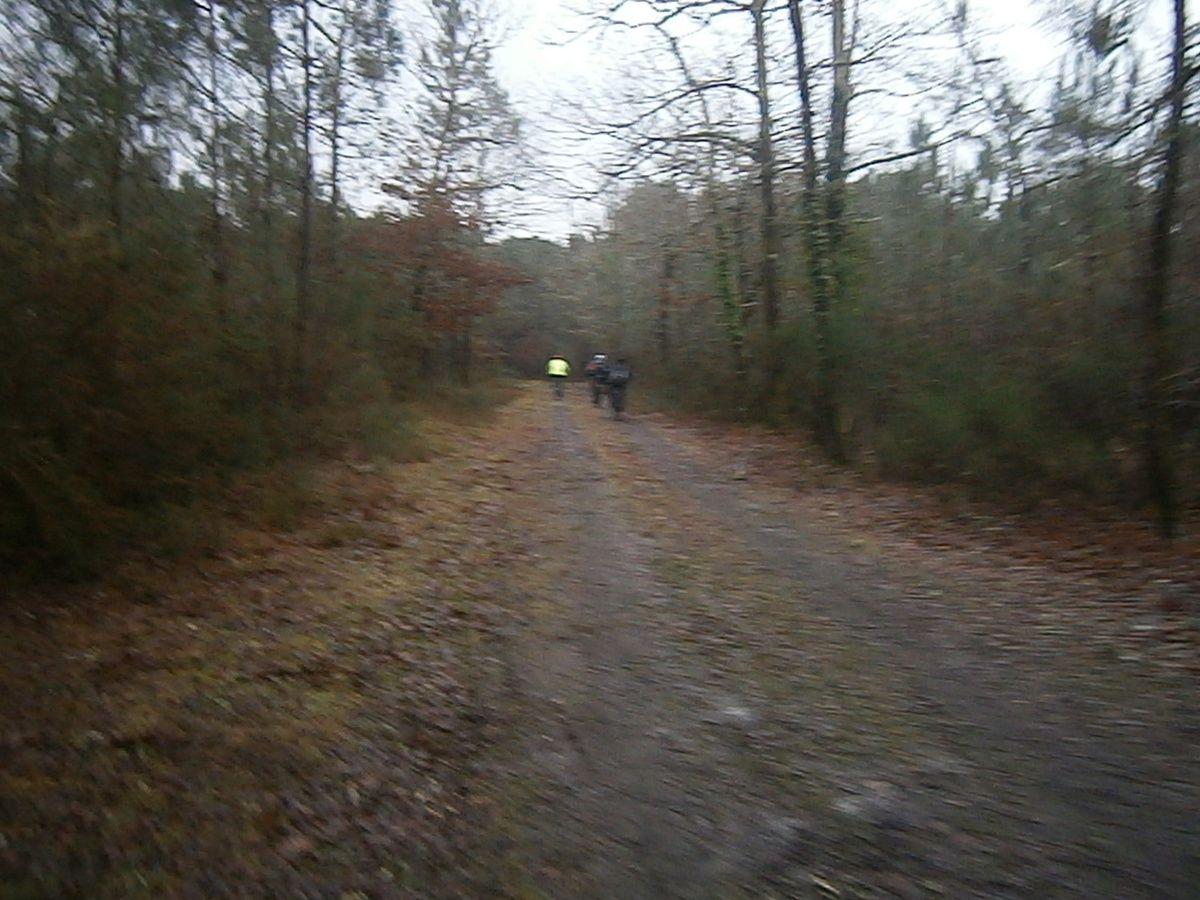 Nous coupons à travers bois . Température idéale pour le VTT