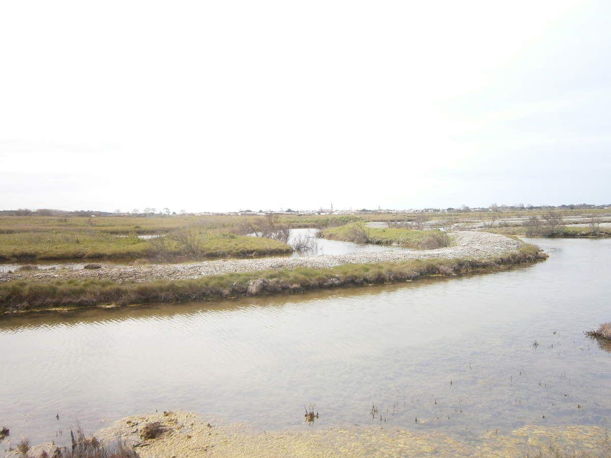 Vadrouille en île de Ré