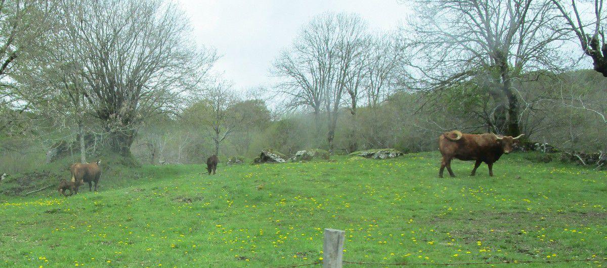 Les Gorges de Courgoul et j'adore les vaches .!!!!!!!