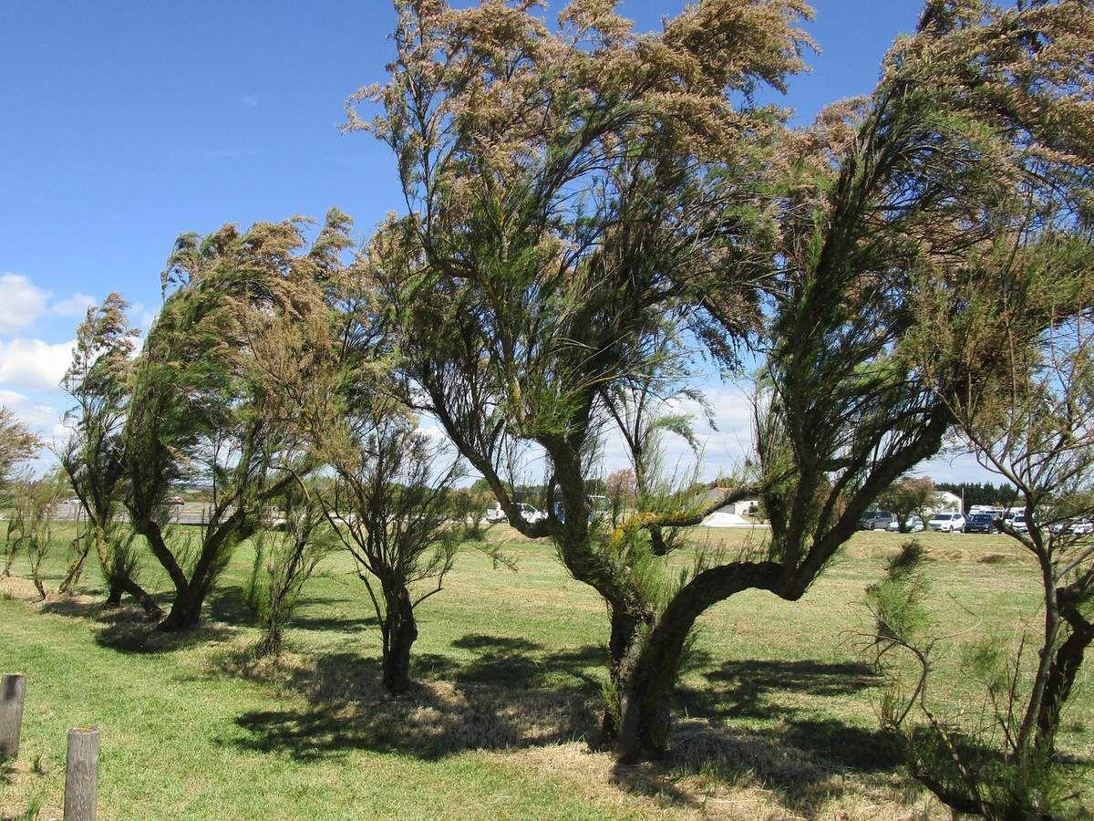 Le vent souffle et les arbres plient
