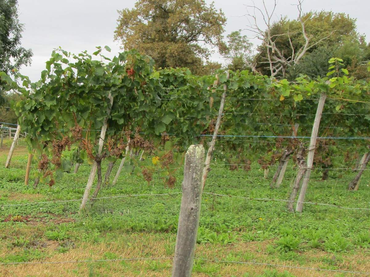 La randonnée des vignes 2019 à JURANCON