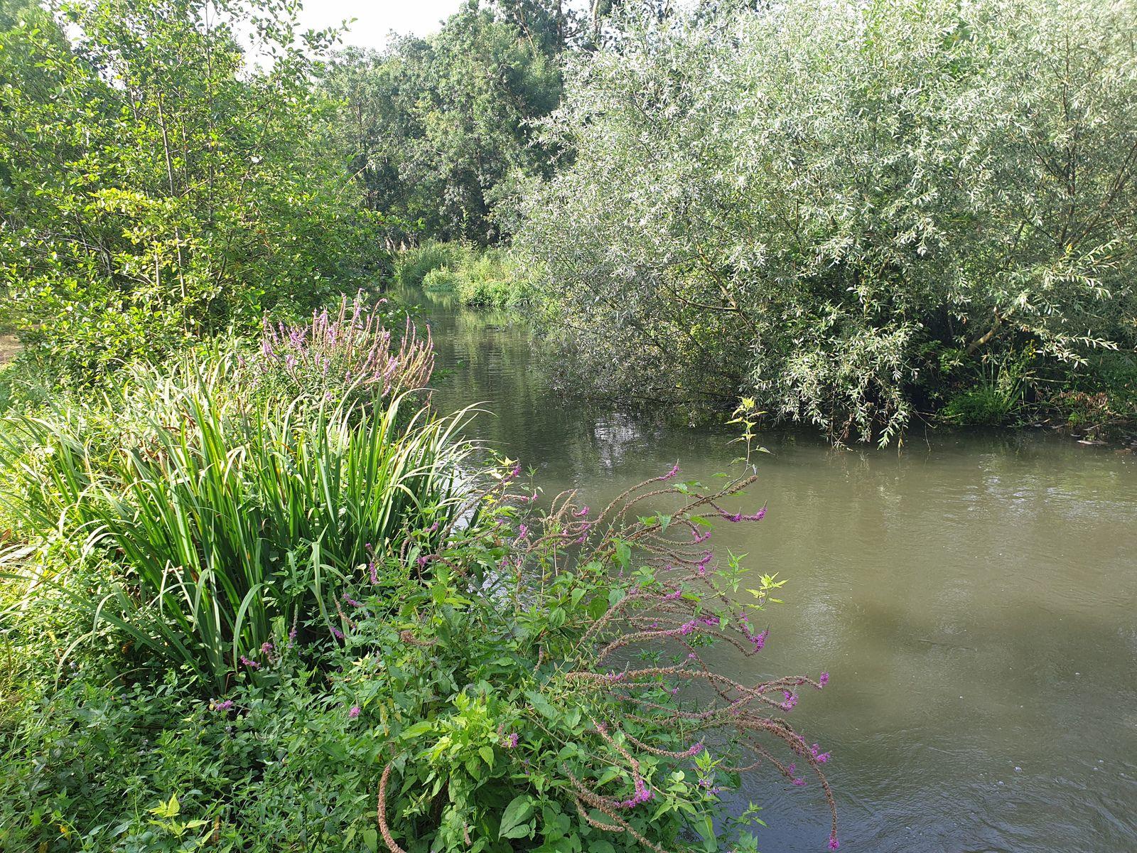 Un petit tour dans le marais Poitevin