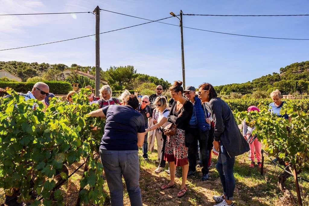 Dans le cadre du Festival de l'Annonciade : Visite de la cave et du chai, dégustation. Marche et pique-nique tiré du sac.