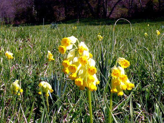 Le printemps au Bon Lieu