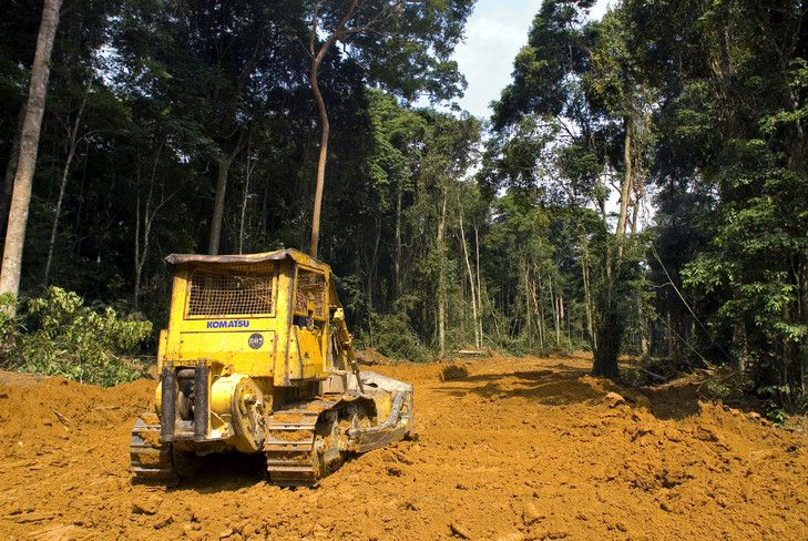 déforestation-gabon