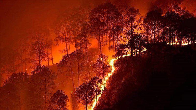 feux-forêts-amazonie