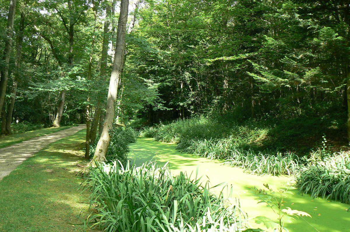 Forêt régionale de Montgé  en Goële : un lieu de promenade en famille