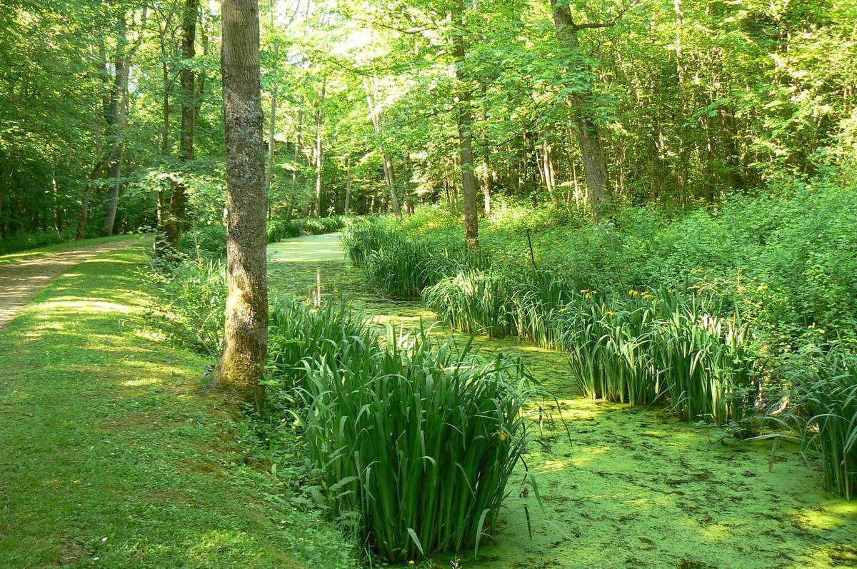 Forêt Régionale de Montgé en Göele  : Venez découvrir les iris  et les buissons de rhododendrons