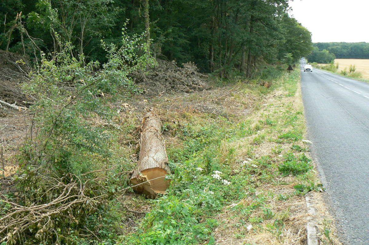 DEFORESTATION OU DEBOISEMENT MONTGE EN GOELE au bord de la D41: Valérie Pécresse doit s'expliquer!