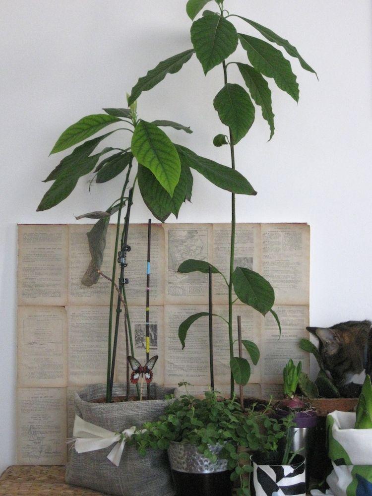 Urban Jungle Bloggers * Creative plant pot